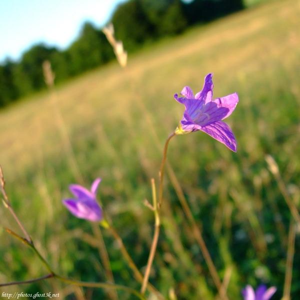 To Blossom Blue